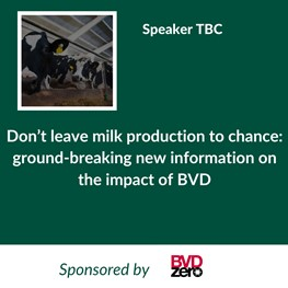 BVD (Sponsored by BVDZero)