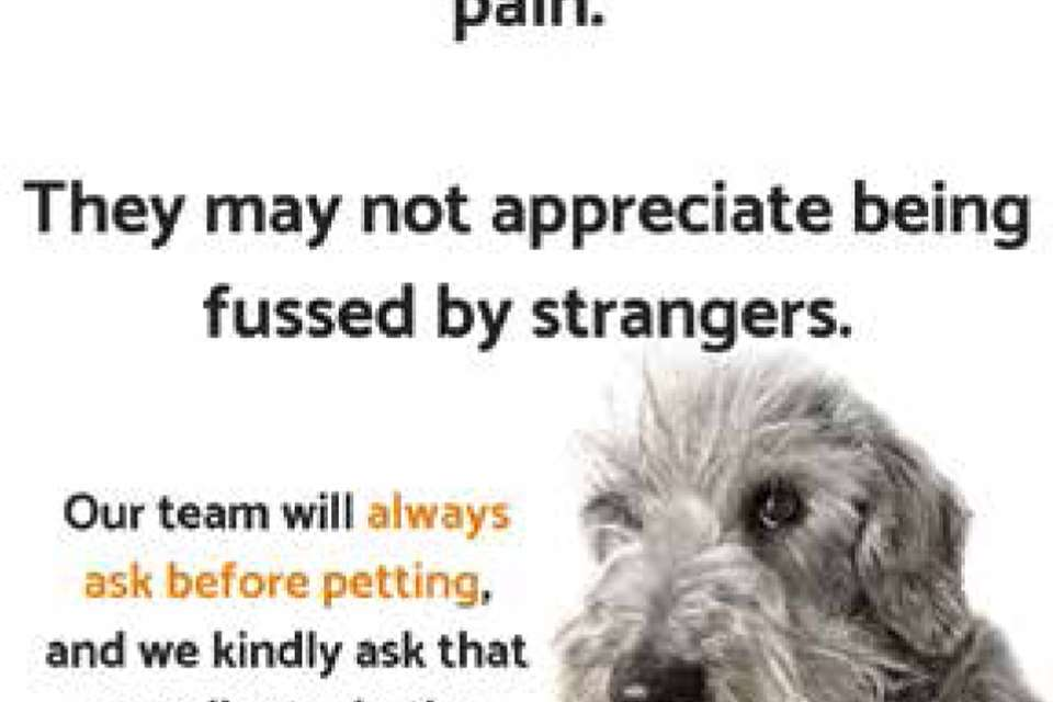 Ask To Pet — be a responsible dog lover