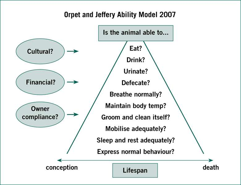 Using the ability model to design and implement a patient care plan
