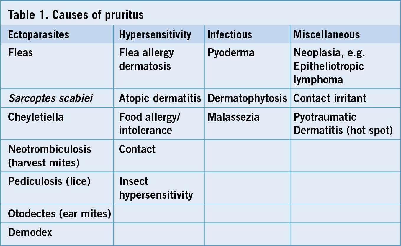 The Veterinary Nurse | Chronic pruritus in dogs: a