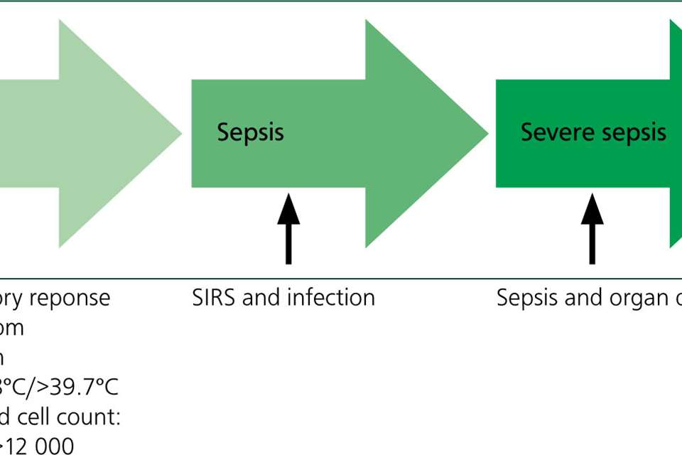 Nursing a canine in septic shock: a patient care report